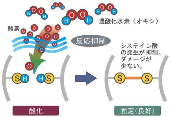 反応抑制型過酸化水素2剤