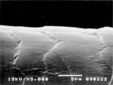 イオンコンプレックス(コアセルベート)を利用したサロンプロトリートメント②