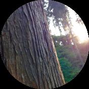 糖化抑制に効果的なプテロカルプス「マルスピウム樹皮エキス」